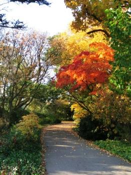 Arboretum Japan