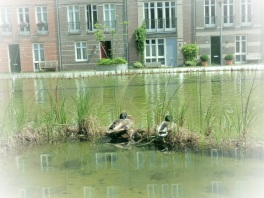 Flora en fauna 't Haegsche Hof