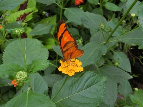Vlinder op de kiek