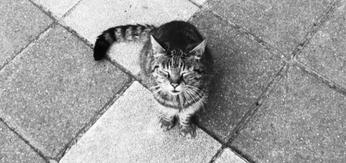 Fotoshoot streetcat