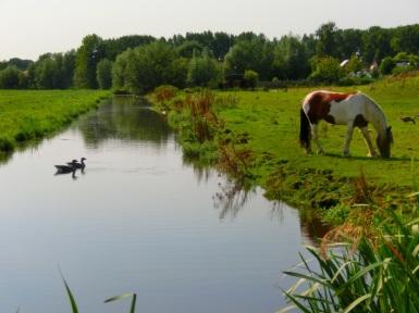 Ganzen en paarden