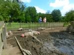 Lekker in de modder wroeten