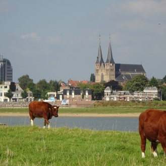 koeien-en-deventer