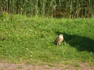 konijnenuil