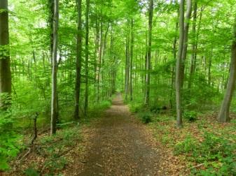 Na een pittige klim eindelijk boven in het bos