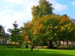 potje-voetbal-in-het-park