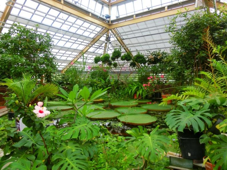 Botanische Tuin Leiden : Favoriete botanische tuin u2013 vera wandelt