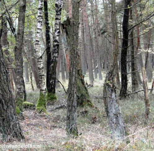 bomen-trage-tocht-rozendaalse-veld-bron-www-wolfswandelplan