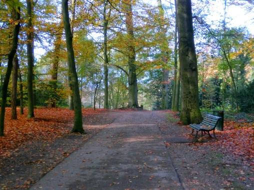herfst-in-het-park