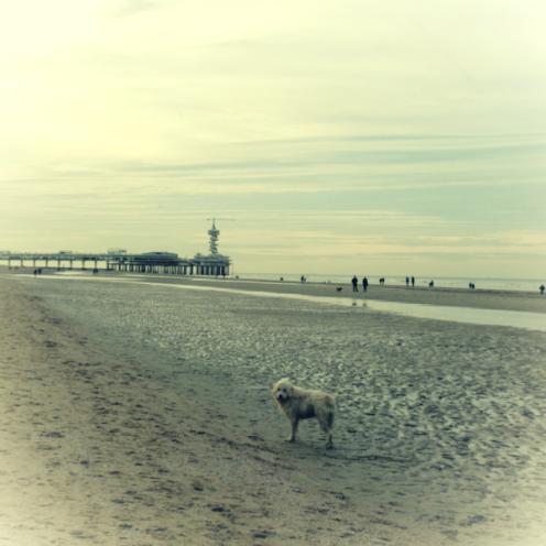honden-tijdens-het-wandelen