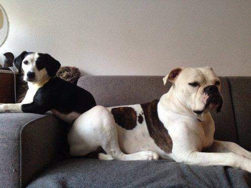 honden-van-nancy-van-bergen