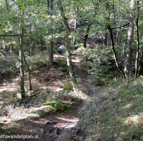 paden-trage-tocht-hoenderloo-bron-www-wolfswandelplan-nl