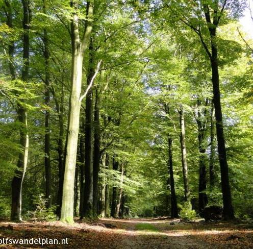 trage-tocht-hoenderloo-bron-www-wolfswandelplan-nl