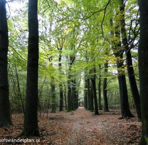 trage-tocht-rozendaalse-veld-bron-bron-www-wolfswandelplan-nl