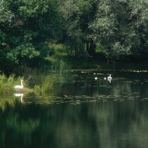 weerspiegeling-van-het-bos-in-de-ven-bron-stieneke-den-braber