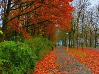 herfst-in-buitenveldert