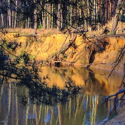 ontwortelde-bomen-langs-de-dinkel