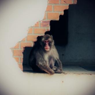 aapjes-kijken-amersfoort