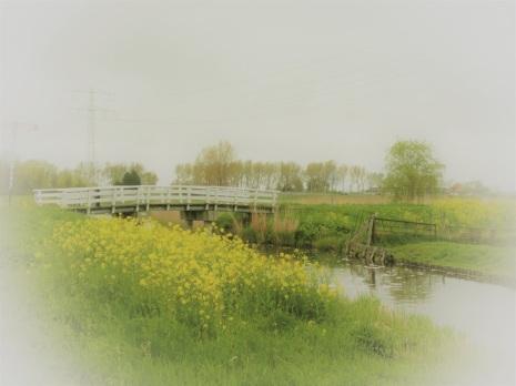 bruggetje-in-het-weiland