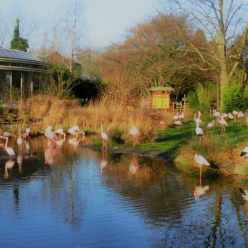 flamingos-bij-de-rivierahal