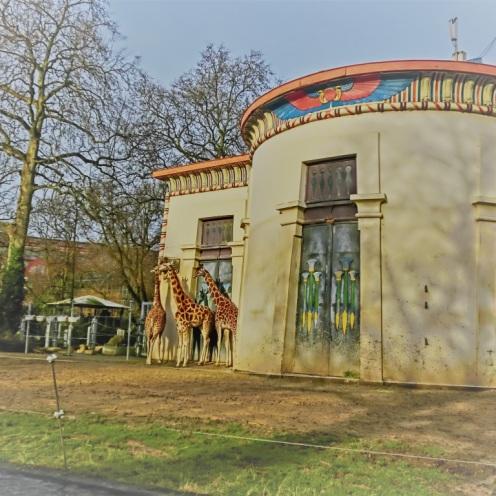 giraffen-antwerpen