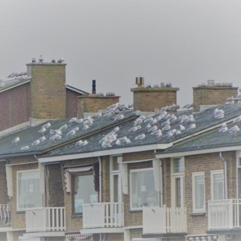 huizen-bij-katwijk