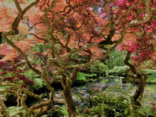 japanse-tuin-clingendael