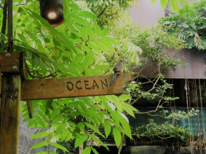 ocean-burgers-zoo