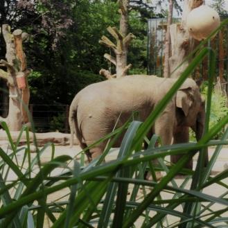 olifant-amersfoort
