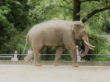 olifant-berlijn