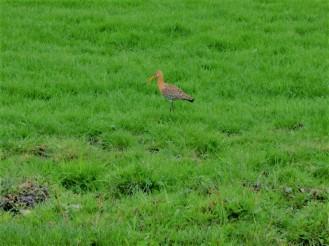 overal-trekvogels