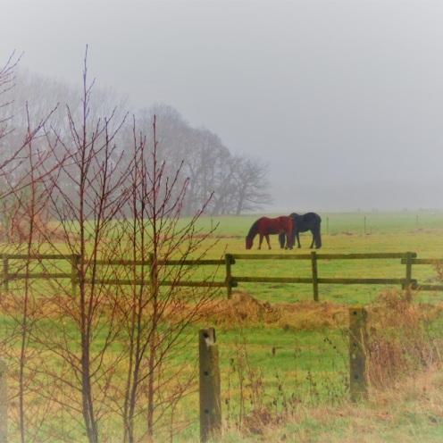 paarden-in-de-polder