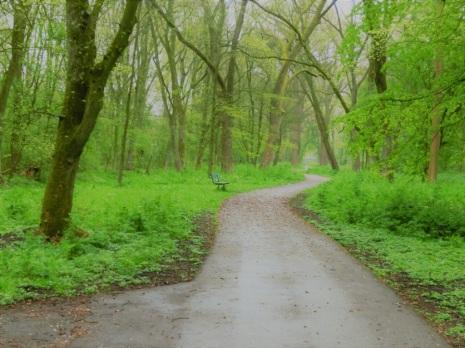 slingerpaden-door-het-bos
