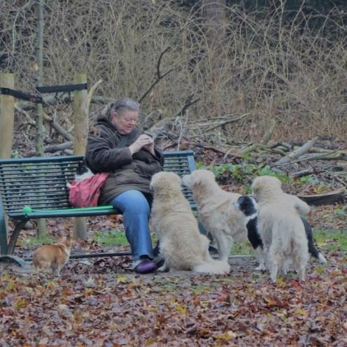 vrouw-met-honden