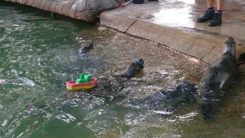 zeehonden-in-dierentuin-nordhorn-van-jeanine-bults-bijker