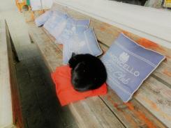 Zwarte kat bij Soif