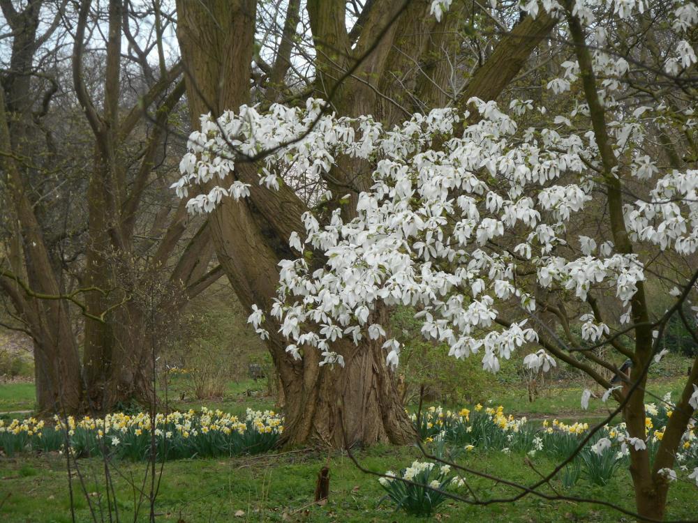 Magnolia's NS wandeling Belmonte van Stien den Braber