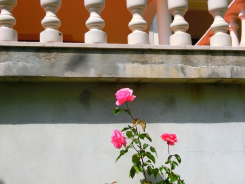 Roos Quinta no Pinhal