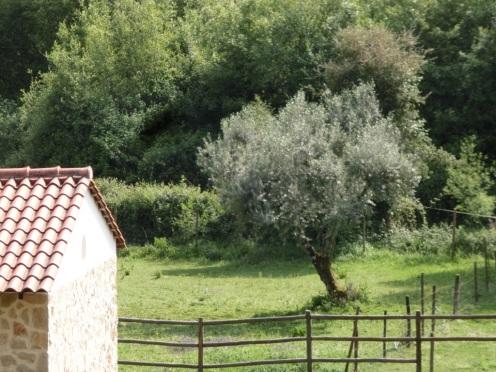 Weide Quinta no Pinhal
