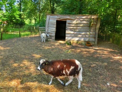 Blatende schapen