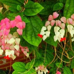 Kleurijke bloemen