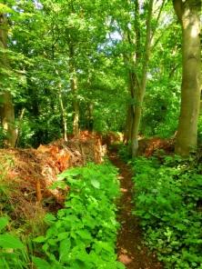 Pad door de jungle