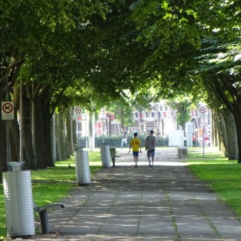 Pad onder bomen