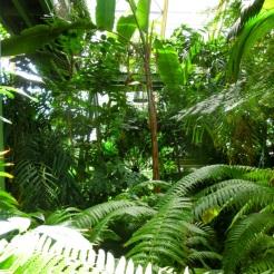 Tropische kassen