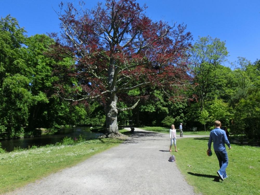 Dikste boom van Clingendael