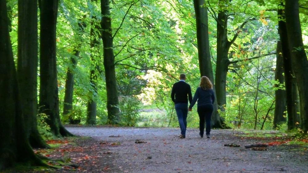Wandelen in het Haagse bos
