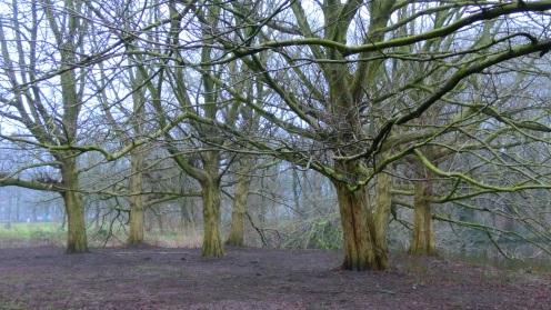 Bomen Rembrandtpark