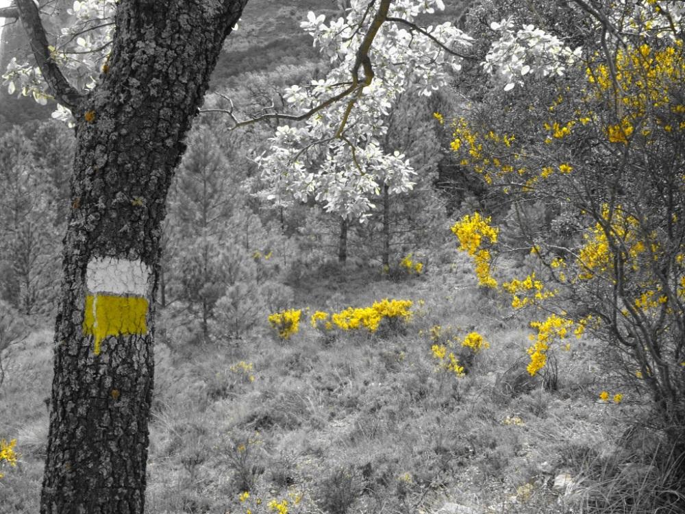 Geel witte markering