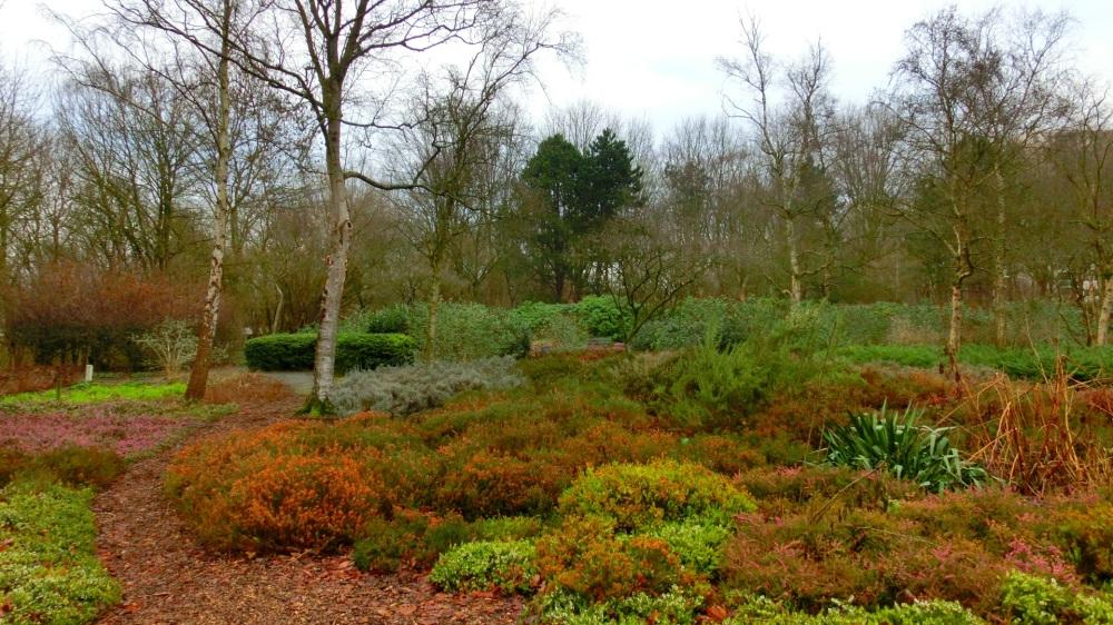 Heide in het Baanakkerspark