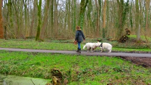 Honden uitlaten in het Vliegenbos